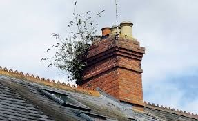 Is vegetation growing on your chimney?