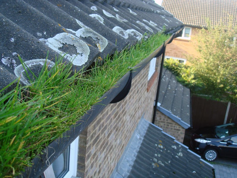 Gutter Cleaning - November Offer of the Month